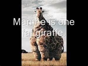 World's Fattest Giraffe