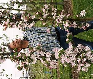Dekorative Bäume Für Kleine Gärten : s ulen apfelb ume ideal f r kleine g rten ~ Markanthonyermac.com Haus und Dekorationen