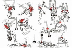 Provide 38 Images Of Beginner Bodybuilding Workout