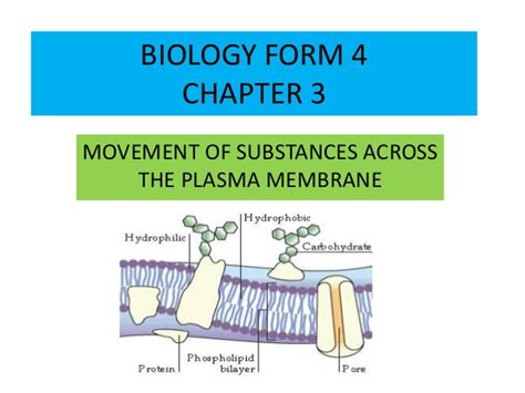 biology form 4 chapter 3 movement of substances across
