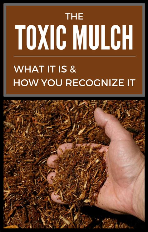 is mulch toxic the toxic mulch what it is and how you recognize it gardentipz com