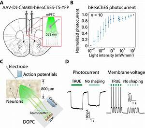 Deep Tissue Optical Focusing And Optogenetic Modulation