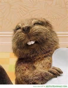 Beaver Buck Teeth