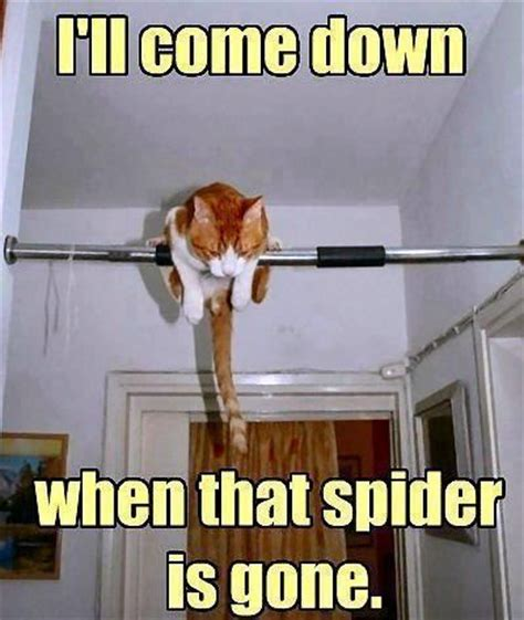 Afraid Of Spiders Meme - view all funny animal pictures with captions very funny cats cute kitty cat wild animals