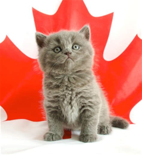 caturday theme canadian cats with images