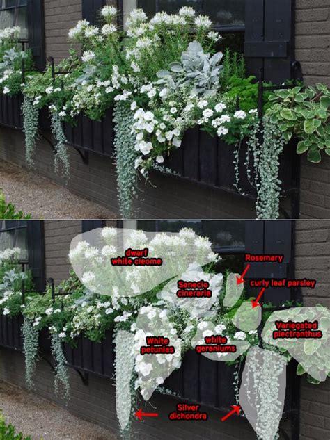 cool  elegant white windowbox planting detail