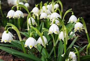 Blumen Im Frühling : first fr hling schneegl ckchen blumen im garten stockfoto colourbox ~ Orissabook.com Haus und Dekorationen