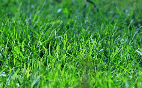 Cytotec In Dubai Lawn Care It S Time To Get The Basics Straight Dan330