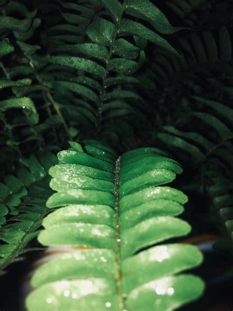 leaves  tumblr