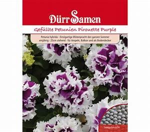 Petunien Samen Kaufen : d rr samen gef llte petunien 39 pirouette purple 39 dehner ~ Michelbontemps.com Haus und Dekorationen