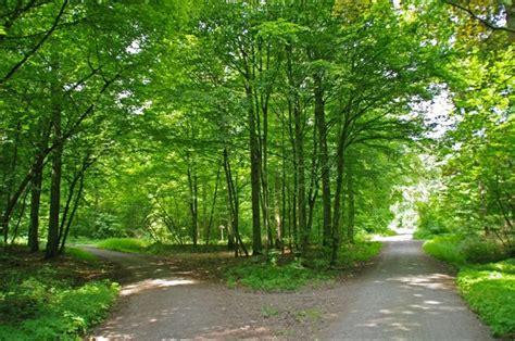 Waldwegkreuzung Mgrs Unv Geograph Deutschland