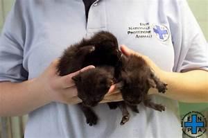 Animali, campioni dell'abbandono: i gattini lanciati dal finestrino del Suv in corsa 1 di 1