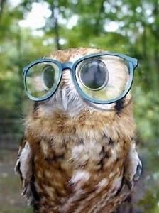 animals wearing glasses looking xcitefun net