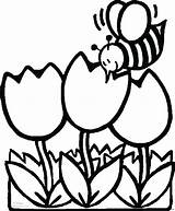 Coloring Bee Tulips Printable Flowers Sheet sketch template