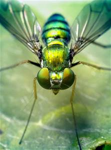 Green Fly | Flickr - Photo Sharing!