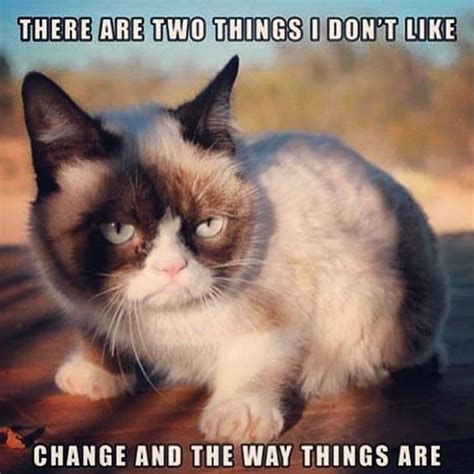 Angry Cat Meme - grumpy cat meme grumpy cat pictures and angry cat meme
