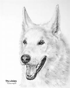 White Wolf Dog Hybrid Drawing by Kate Sumners