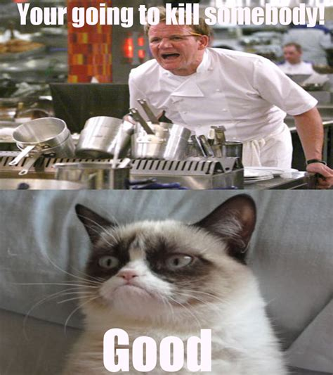 Grumpy Cat Good Meme - caterville grumpy cat memes
