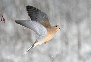 39 best Doves & Pigeons images on Pinterest | Beautiful ...