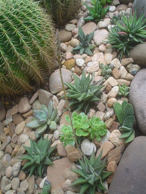 succulent flower bed dry creek bed with succulents river beds pinterest gardens front yards and side yards
