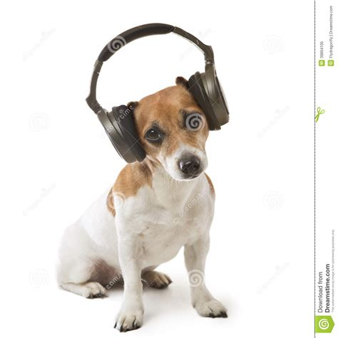 dog  fan stock image image  meloman party