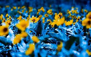 Blue And Yellow Flower Wallpaper 4 Background ...