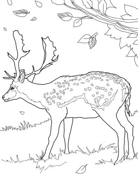 printable deer coloring pages  kids