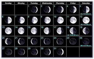 Moon Phases Bait And Tackle Pine Island