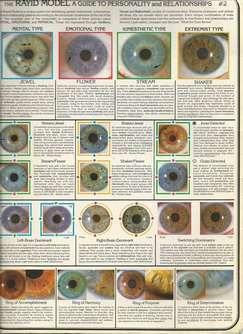 what color are my chart pin by on health and wellness iridology chart