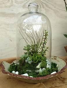 Sukkulenten Im Glas Pflanzen : image result for succulent cloche bad jardiner a suculentas und decoraci n cactus ~ Eleganceandgraceweddings.com Haus und Dekorationen