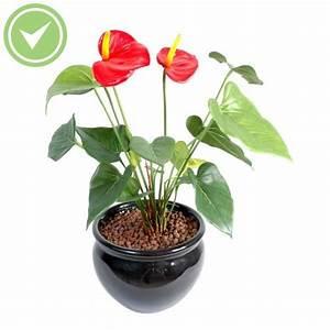 Plante D Intérieur Haute : plante verte d 39 int rieur haute maison et fleurs ~ Dode.kayakingforconservation.com Idées de Décoration