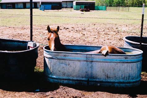 horse meets kiddie pool