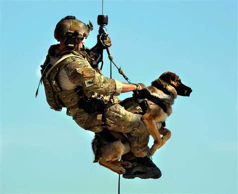 military  flying dog