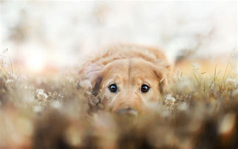 Baby Dog Hd Wallpapers Free Download 1080p