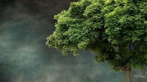 nature rain wallpaper  pictures
