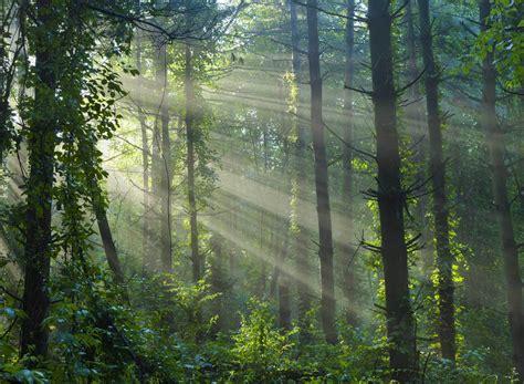 Lang Elliott  Music Of Nature