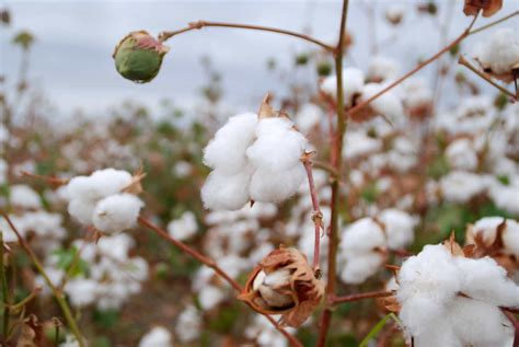 ikea memory foam best cotton sheets sleepopolis