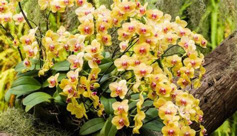 Foto: Kā savvaļā aug eksotiskās orhidejas - DELFI