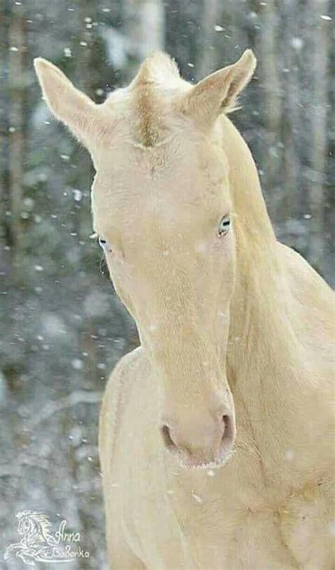 horse horses animals rare