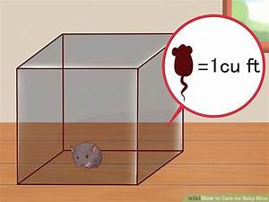 The Best Way To Care For Baby Mice