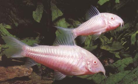 mort subite d un poisson help