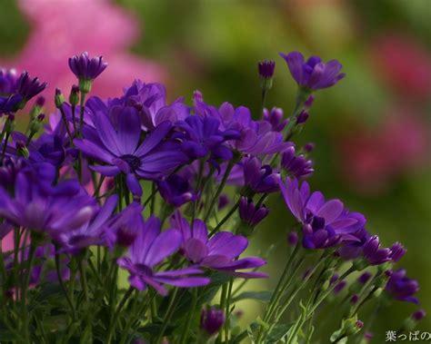 purple spring flowers wallpapers wallpapersafari