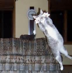 cat bomb 10 hilarious animal photobombs pictures