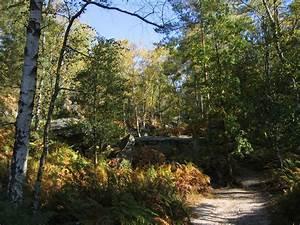Bilder Vom Wald : wald von fontainebleau wikipedia ~ Yasmunasinghe.com Haus und Dekorationen