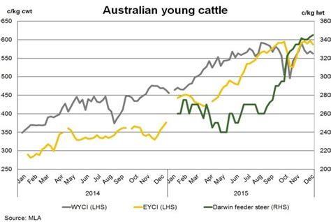 annual average cattle prices lift   year high