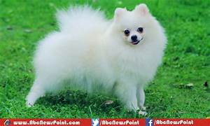 Top 10 Most Beautiful Dog Breeds in the World 2017 ...