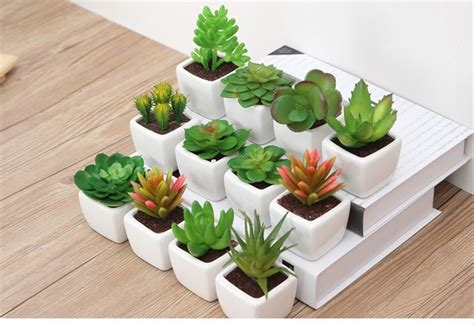 jual naindo bunga kaktus mini hiasan ruang tamu  kantor