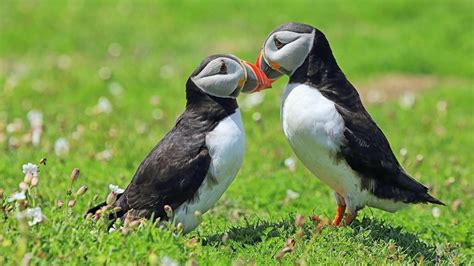 what do you call a baby puffin reference com