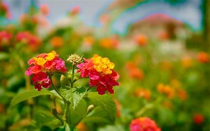 Flowers Flower Wallpapers Park Colorful Backgrounds Natures