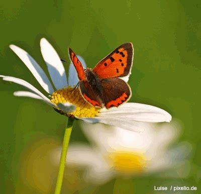 Schmetterlinge Im Garten Gartenratgebernet